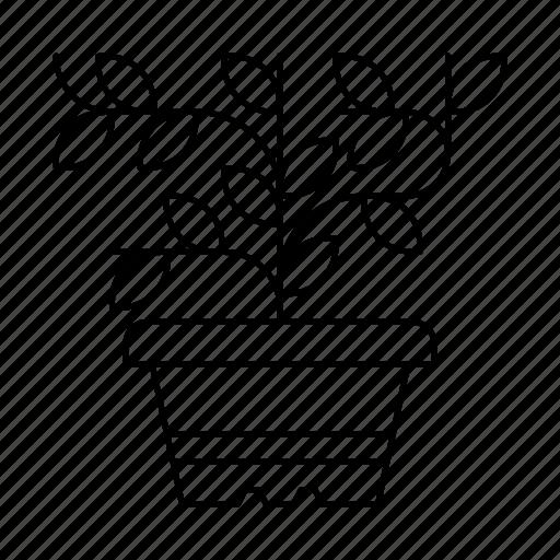 flower, garden, herb, leaf, nature, plant, tree icon
