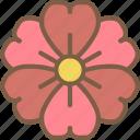 flower, nature, summer