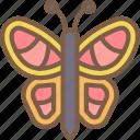 butterfly, nature, summer