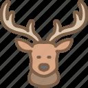 deer, nature, summer