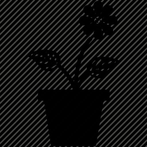 daisy, daisy in pot, flower, nature, plant pot icon