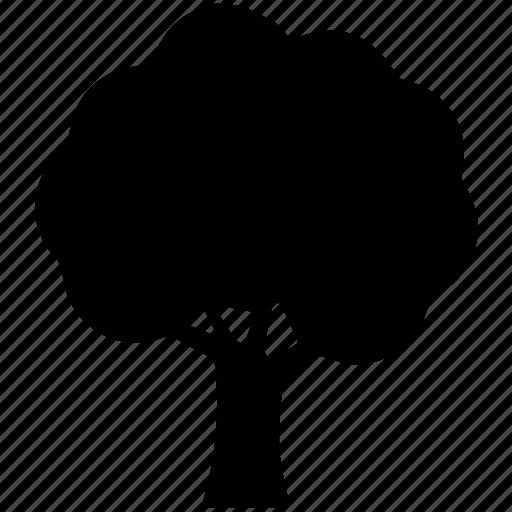 ash, generic tree, nature, shrub tree, tree icon