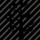 generic tree, heart shape leaves, leafy tree, tree