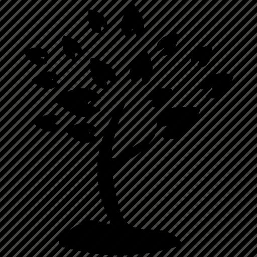 generic tree, leafy tree, leaves, nature, tree icon