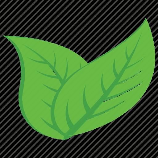 aspen, leaves, nature, plant, tree leaves icon