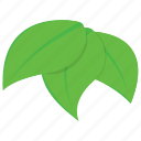 aspen, leaves, nature, plant, tree leaves icon
