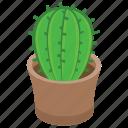 cacti, cactus, cactus pot, succulent, wild plant