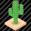 botanical, cacti, cactus, succulent, wild plant