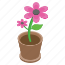 flower, nature, outdoor plant, pot flower, pot plant icon