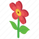 daisy, floral design, flower, nature, outdoor plant icon
