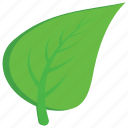 aspen, leaf, nature, plant, tree leaf icon