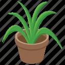 botanical, home decoration, nature, outdoor plant, pot plant