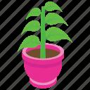 botanical, home decoration, nature, outdoor plant, pot plant icon