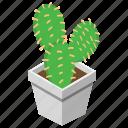 botanical, cacti, cactus, succulent, wild plant icon