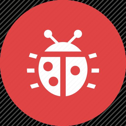 bug, insect, ladybug, nature, spring, virus icon