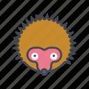 animal, cartoon, face, head, hedgehog, prickly, spikes