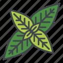 food, herbs, ingredients, leaves, peppermint, seasoning, spice icon