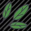 bay leaves, food, herb, ingredients, laurel, seasoning, spice