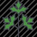 food, herb, ingredients, leaf, parsley, seasoning, spice icon