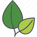 basil, food, herb, ingredients, leaves, seasoning, spice icon