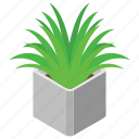 decorative plant, domestic plant, living thing, plant, urn