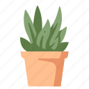 decoration, grow, leaf, nature, plant, pot