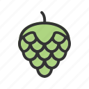 agriculture, beer, fruit, hops, ingredient, natural, plant icon