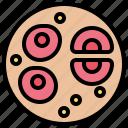 cells, mitosis, nucleus, somatic, stem icon