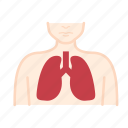 body, organ, medical, anatomy, health, healthcare, lung