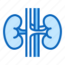 kidneys, nephrology, urology icon