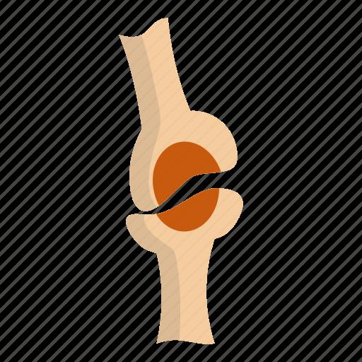 bone, injury, joint, knee joint, orthopedic, osteoporosis, pain icon