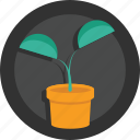 grow, jar, plant, pot, tree, tub icon
