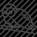 barn owl, bird, birds of prey, night, owl, tawny owl