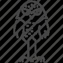 bird, birds of prey, burrowing owl, night, owl