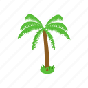 beach, isometric, nature, palm, summer, tree, tropical