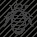 flea, lice, parasite, pest