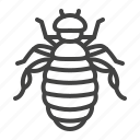 flea, lice, parasite, pest icon