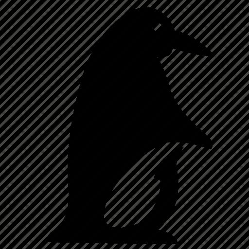 animal, arctic, bird, penguin icon