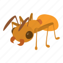 animal, ant, cartoon, insect, logo, nature, pest icon