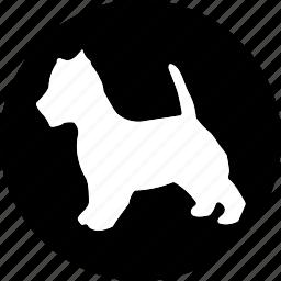 animal, animals, breed, domestic, mammal, pet icon