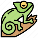 camouflage, chameleon, climber, lizard, tree icon