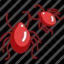 animals, bug, care, flea, insect, parasite, pet