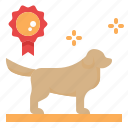 dog, show, contest, breeding, kennels, breeder, golden retriever