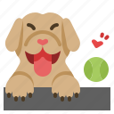 funny, dog, golden, retriever, playing, swimming, happy
