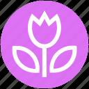 blossom, camera, flower, macro, photo, photography, plant