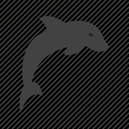 Animal, dolphin, fish, mammal, marine, nature, ocean icon - Download on Iconfinder