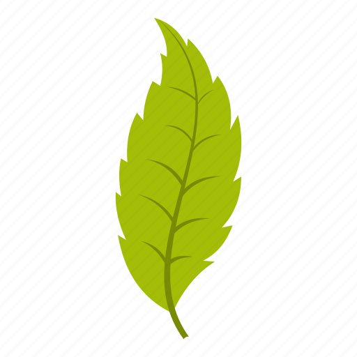 ash, element, leaf, natural, nature, organic, plant icon