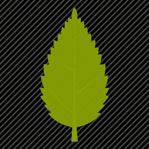 element, hornbeam, leaf, natural, nature, organic, plant icon