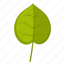 element, leaf, linden, natural, nature, organic, plant icon