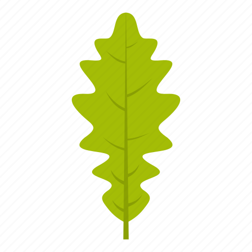element, leaf, natural, nature, oak, organic, plant icon